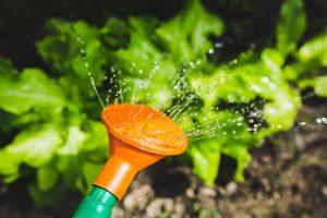 watering-gardening